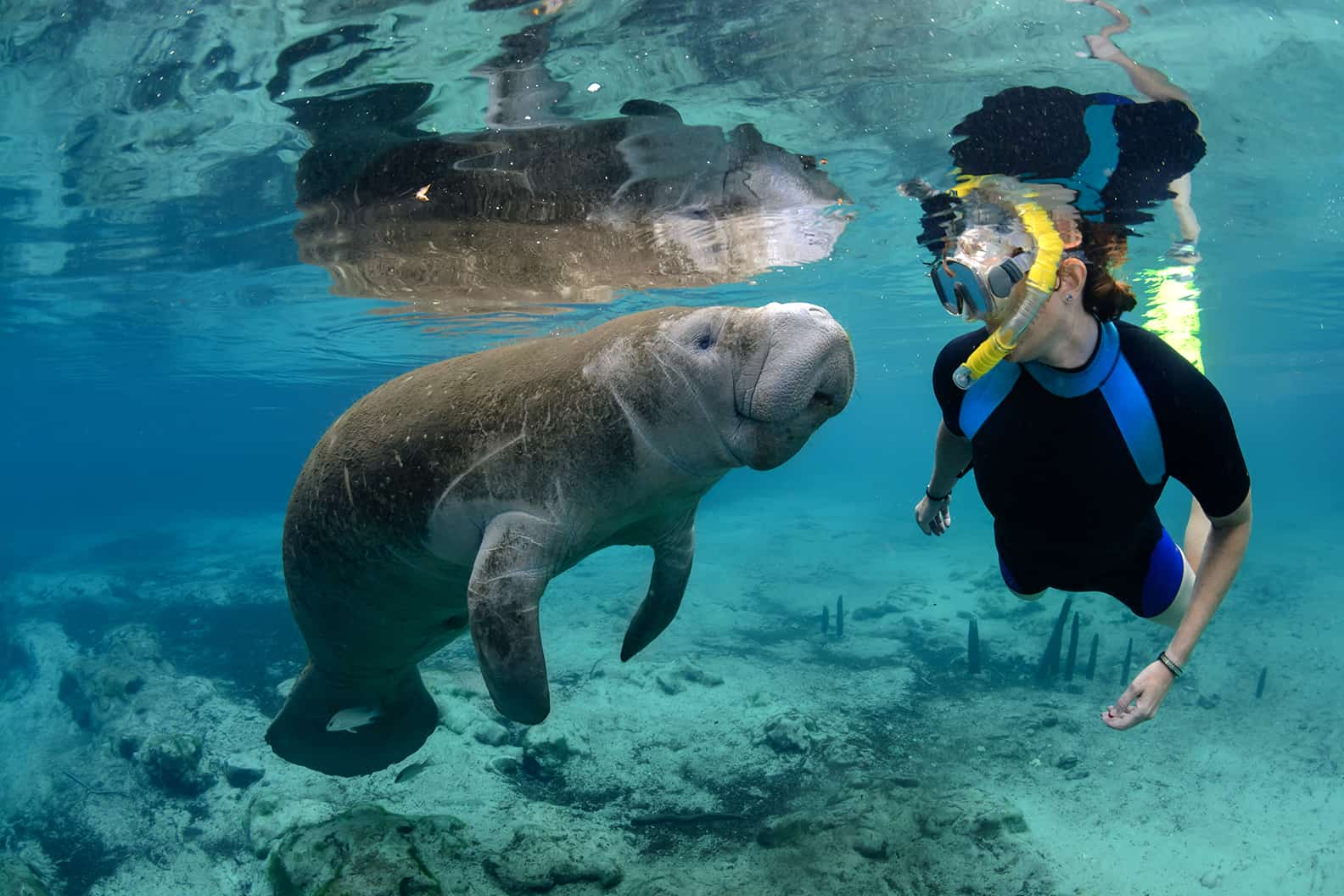 Encounters with manatees in crystal river florida for Swimming images